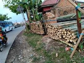 Jual Bambu murah kebutuhan proyek