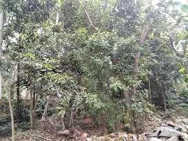 20 സെന്റ് വസ്തു വിൽപനയ്ക്ക് നെല്ലിമൂട് മരപ്പാലം റോഡിൽ