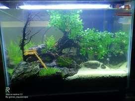 Aquascape bonsai 3D dan tebing air terjun tanaman plastik