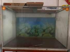 Akuarium Aquarium ikan