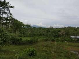 Tanah dan Hasil kebun