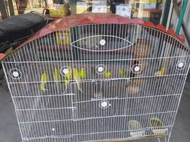 8 parrots for sale and also cage