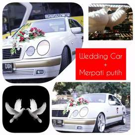 wedding car or mobil pengantin sewa mercy alphard 700 k all in 10 jam