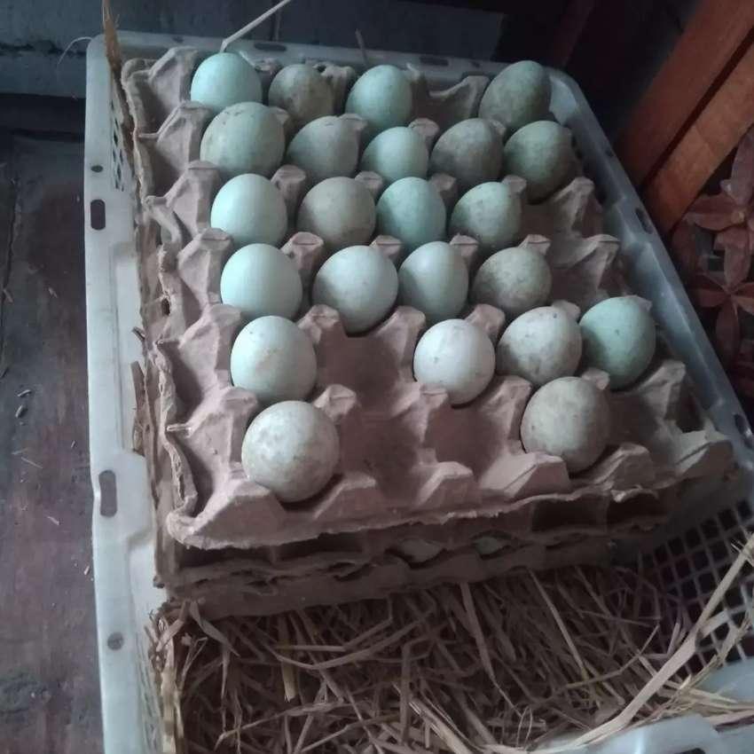 Telur Bebek Bayah