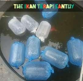 The Ikan Terapi Santuy