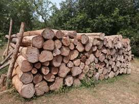 5000 feet teak wood for sale.. With all legal documents