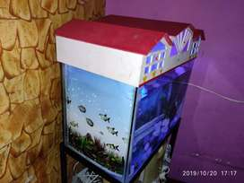 Aquarium with Flowerhorn fish sale one year old.