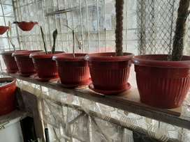 Plant plastic Pots / Gamle with plates in 3 different sizes