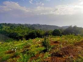 kavling kebun yang dirawat oleh tenaga ahli IPB dan siap dikelola
