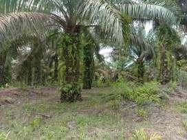 Jual lahan / kebun sawit ad 14 hektar sudah SHM  di belakang sd