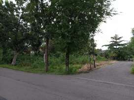 Jual tanah dekat palur Plasa lingkungan gudang lt 555m hrg 4jt/m nego