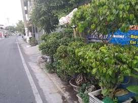 pohon taman bonsai taman