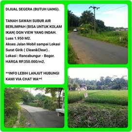 Dijual Cepat BU Tanah Sawah Dipinggir Jalan Dengan View yang Indah 015