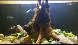 Live planted fish aquarium 7000r size 1×2.5
