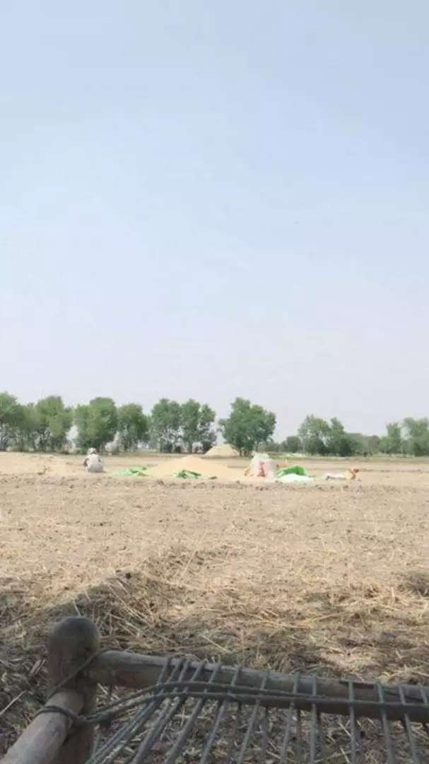 Agricultural Land for Sale 0