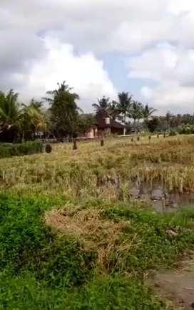 Tanah Global (2Are) Sanggulan Jadi Kediri Tabanan