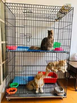 Kandang kucing 2 tingkat/ 2 kamar