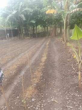 Jual tanah kebun cocok buat perumahan cluster2