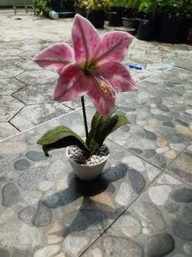 Bunga flanel amarilis pink