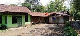 Rumah halaman luas Borobudur magelang