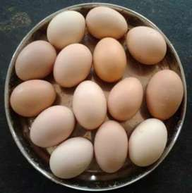 Dasi eggs Available