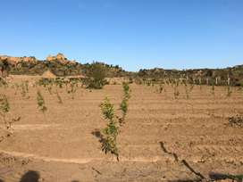40 kanal agriculture land in chakwal