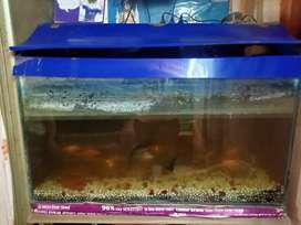 3 feet long Aquarium