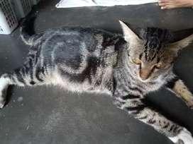 Kucing Unik banget