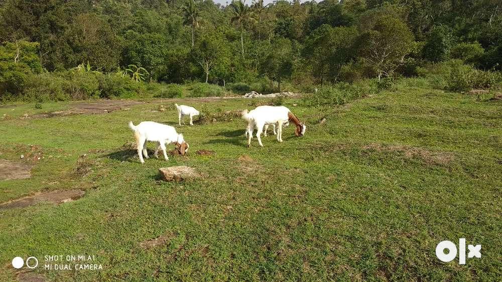 vagamon valacode farm suitable land