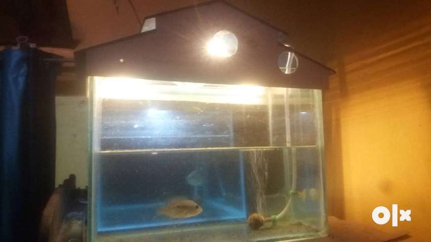 Aquirium in very good condition with LED lights and roof cover 0