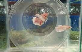 Aquarium plants fishes acessories