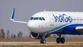 URGENT HIRING IN INDIGO AIRLINES
