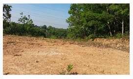 52cent plain land