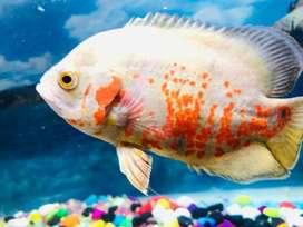 Aquarium 3'x1'6''x1'6''