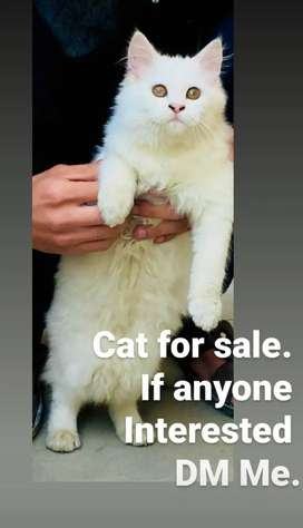 To sell a Cat