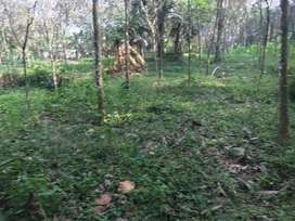 10cent land, one and half kilometres from pallikkathode,
