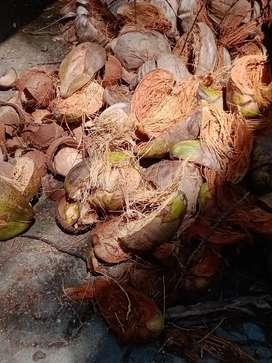 Coconut Husk(ചകിരി) for sale