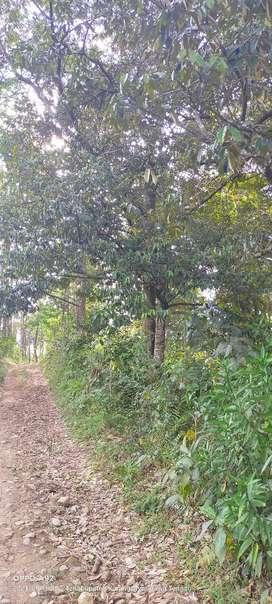 Jual bebun durian lokasi Jumantono luas 1,9Hektar harga 2,5Myd nego