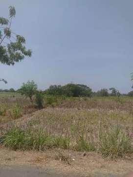 Jual tanah Bagus luas murah di pajangan Bantul kawasan pabrik