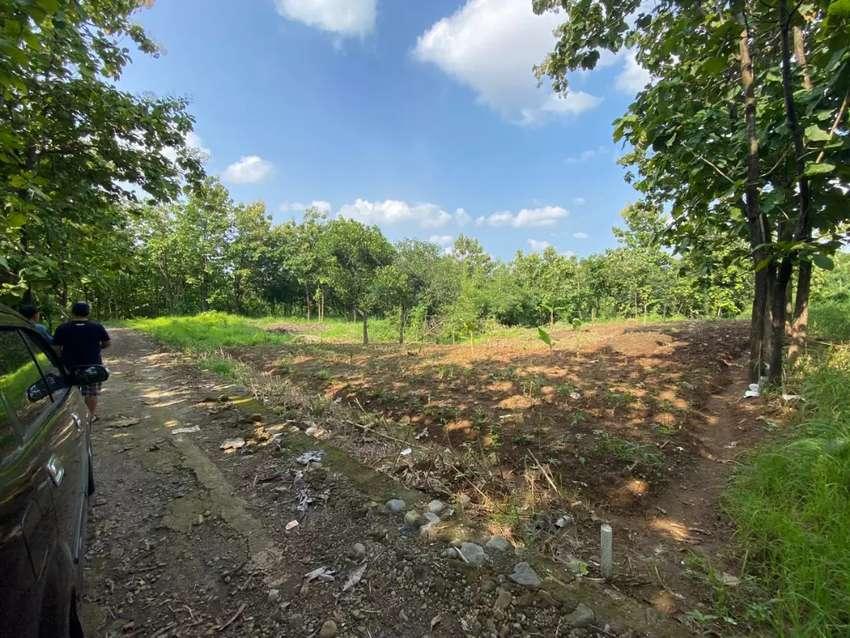 Tanah Luas 1.200 m² SHM