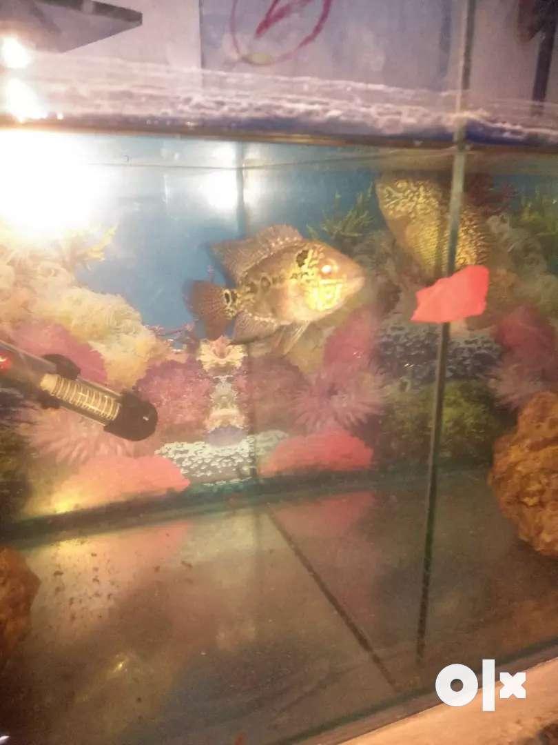 Baby Flowhran fish 0