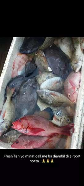 Jual makanan ikan laut