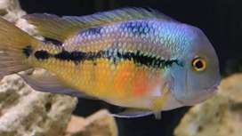 all kind of quality fishes available like: