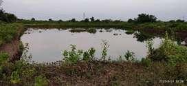 2.5 acre fish plant pond for sale