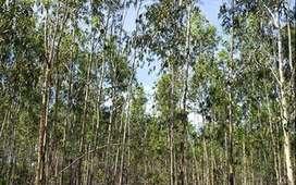 45 acres agricultural land for sale