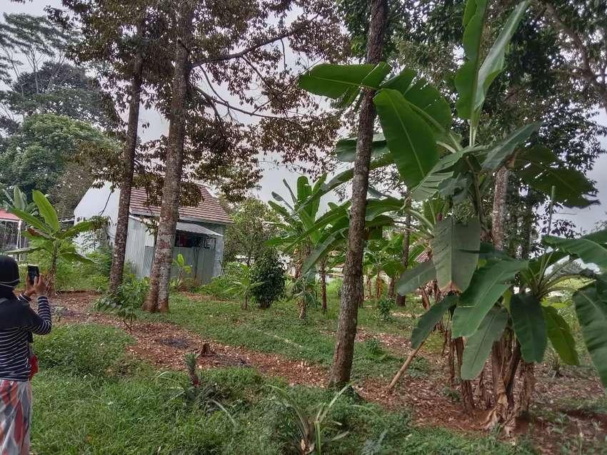 Dijual Murah Kebun Durian di Gunung Pati