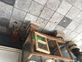 Chicken cage & 4 nadan koyi