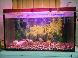 2.5 Feet Big Aquarium For Sale