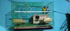 Lovebird dan kandang