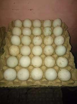 Telur bebek asl